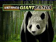 Играть на зеркале GMSlots в автомат Untamed Giant Panda